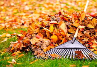 Clean Ups & Leaf Removal
